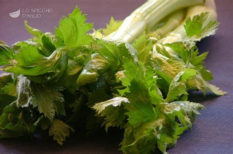 ingrediente sedano le ricette dello spicchio d aglio