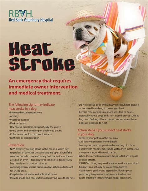 symptoms of stroke in dogs heat stroke www imgkid the image kid has it