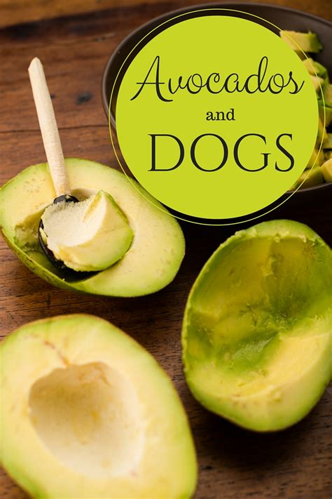 are avocados bad for dogs avocados and dogs pink cake plate