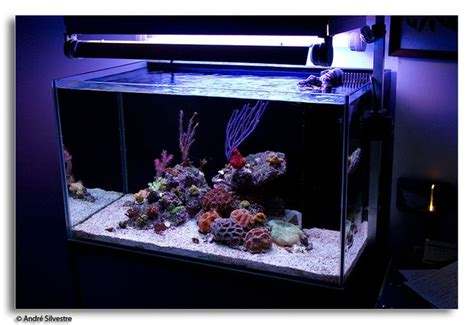 on the rocks how to build a saltwater aquarium reefscape on the rocks how to build a saltwater aquarium reefscape