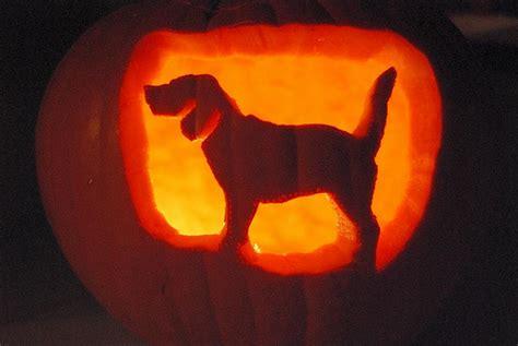 puppy pumpkin carving pumpkin carving stencil ideas