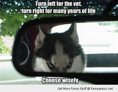 Funny Husky Meme - husky funnies janet carr