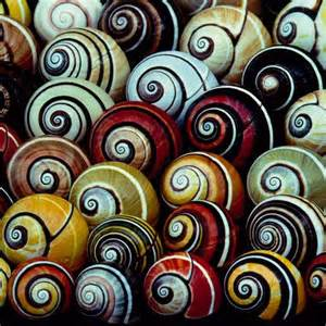 color shell cuban land snail shells or snails more vibrant when