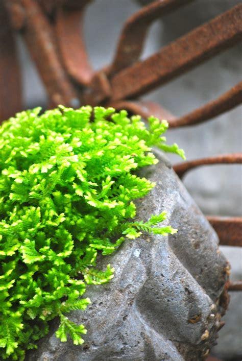 plantas de interior sin luz plantas de interior sin luz natural trendy como sabeis de