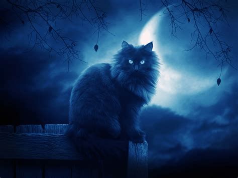cat wallpaper deviantart the black cat ii by moroka323 on deviantart