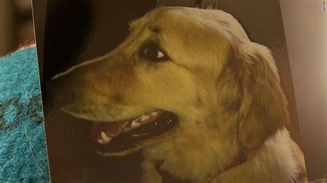 golden retriever petco beloved golden retriever s tragic at petco jun 1 2015