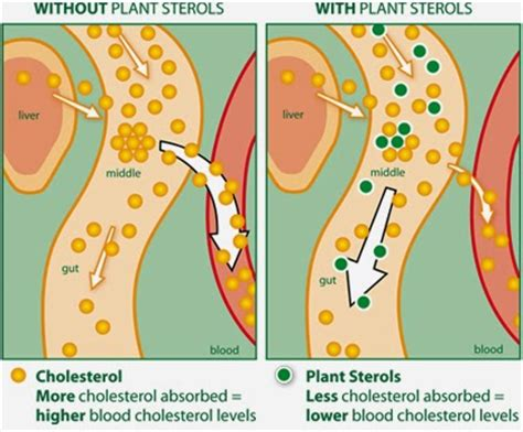 plant sterols lower blood cholesterol levels cathy wright august 2014