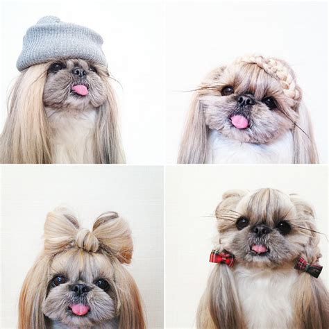 haircuts for long hair dogs kuma the dog instagram hairstyles popsugar beauty australia