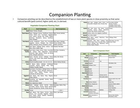 Planting Garden Vegetables Chart Search Results Vegetable Garden Companion Planting Guide