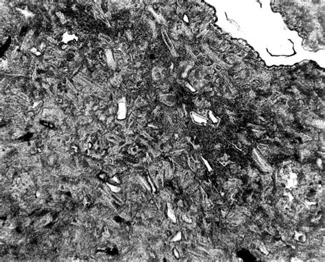 opal thin section thin section of silicified bed in the obispo tuff member