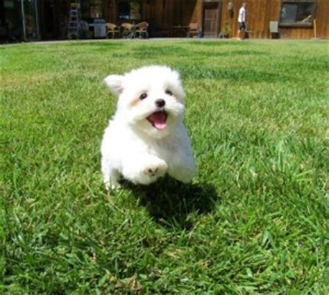 free puppies in louisiana pets metairie la free classified ads