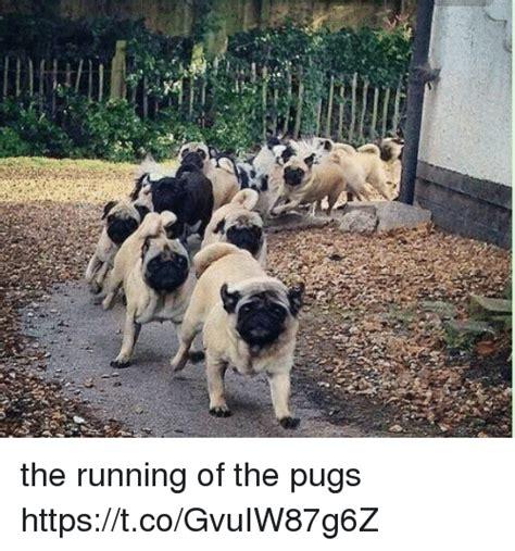 running of the pugs the running of the pugs httpstcogvuiw87g6z pugs meme on me me