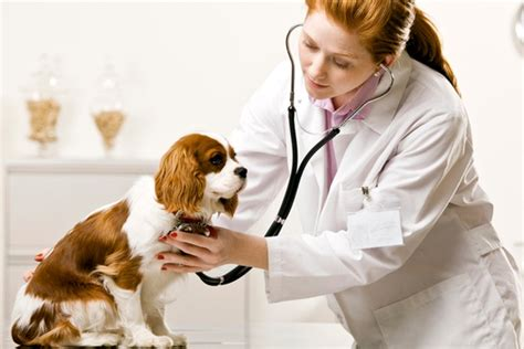 Job Resume Profile by Veterinary Sciences Career Option In Veterinary Sciences