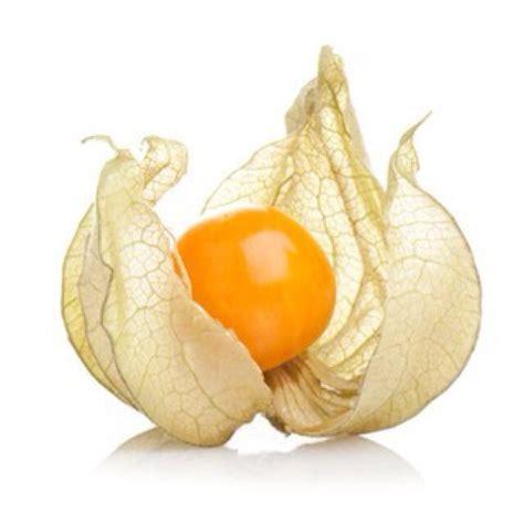 fruit vs berry physalis physalis2p1b