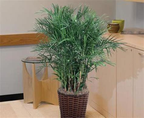 house plants  reduce humidity levels home