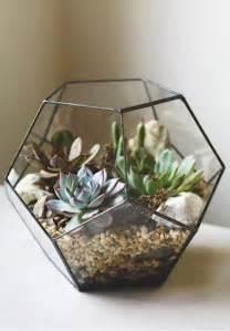 25 best ideas about terrarium on pinterest diy
