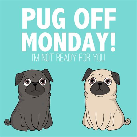 pug monday pug monday i m not ready for you