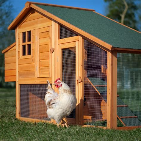 chicken house plans truths of building a chicken coop