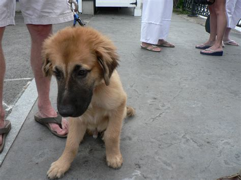 puppy finder nh 18 august 2014 a of granite in new hshire
