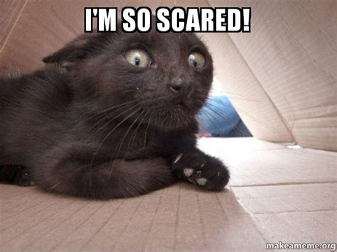 Scared Cat Meme - ohh i m so scared meme pictures to pin on pinterest