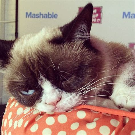 Grumpy Cat Wedding Meme - grumpy cat meme generator popsugar tech