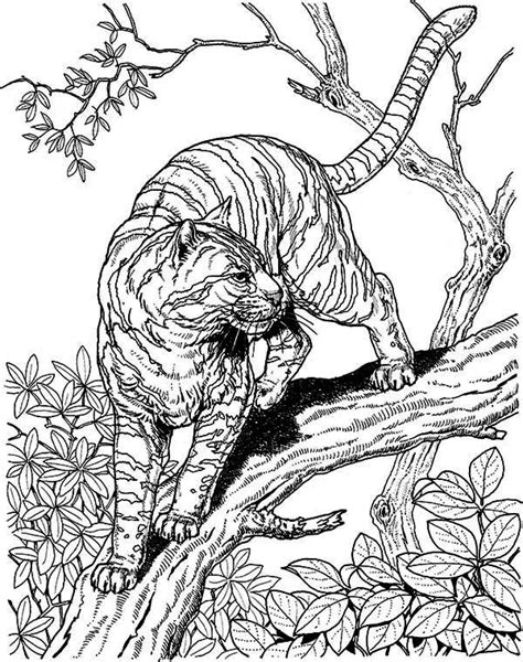 coloring pages for adults tiger tiger coloring pages for kids printable