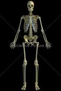 Human Skeleton Click To Download A Printable Version » Home Design 2017