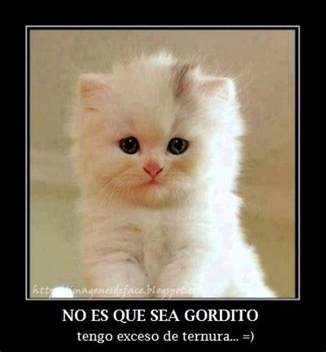 imagenes de gatitos blancas tiernas imagenes gatitos tiernos con frases imagui