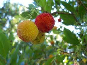 fruits from trees local ecologist foraging tree strawberry and dandelion wines