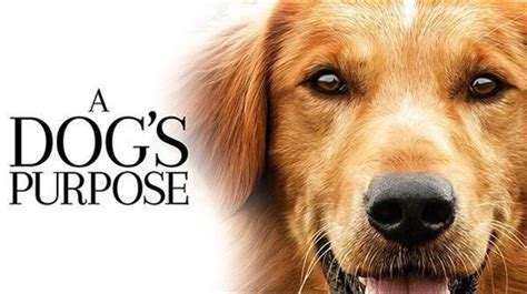 the dogs purpose franklin theatre a s purpose pg