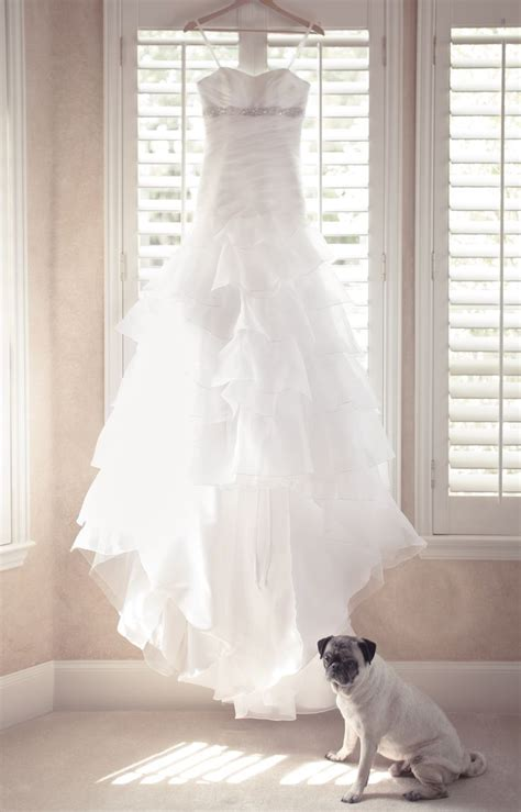 pug in wedding dress pin by mallory goodwin on wedding the of my