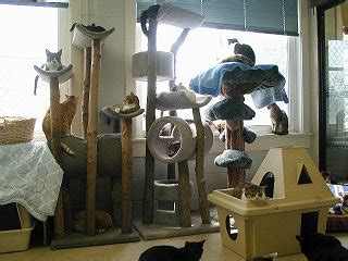 Cat Room Ideas by Pet Room Designing Adorablay Animals