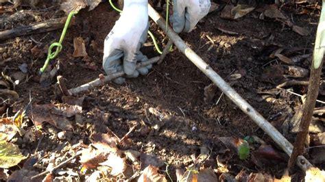 come costruire una gabbia per cani come costruire una trappola per animali di piccola taglia