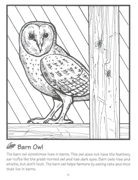 barn owl coloring pages for adults