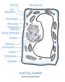 Animal cell diagram blank recommended diagram