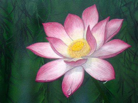simbolo fiore di loto simbologia fior di loto hydrophyllum
