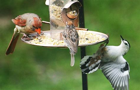 how to choose the right kind of bird feeder all about birds