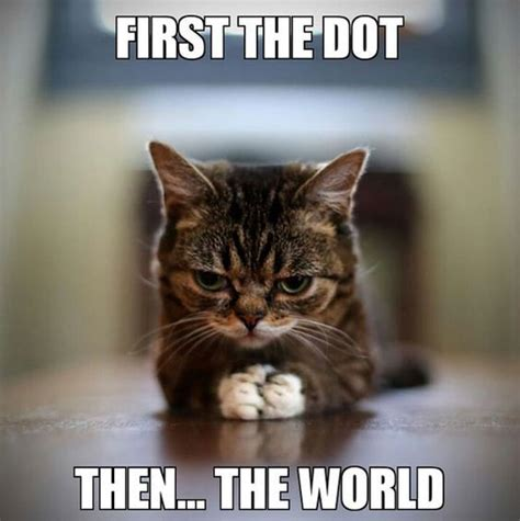 Thanks Aunties We Are The Cat In The Flickr by Top 27 Hilarious Cat Pictures Cats Cats Humor