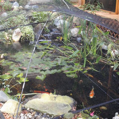 Awesome Bird Netting For Gardens #7: Atlantic_pond_protector_net_kit_scenic_1000.jpg