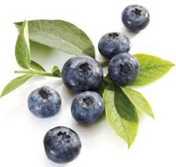 blueberry color blue blueberry colors photo 34682990 fanpop
