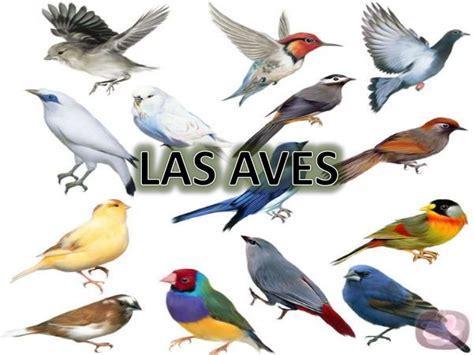 imagenes animales aves exposicion de las aves