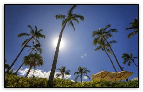 maui wallpaper widescreen  wallpapersafari