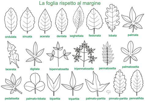 doodle significato italiano classe a colori la foglia