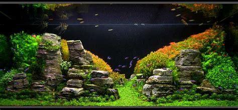 nudo akvaryum bitki akvaryumu yapımı arşivleri nudo konsept akvaryum