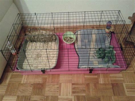 How To Set Up A Rabbit Hutch lionhead bunny cage setup bunny enclosures