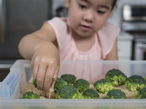 free toolbox melanie potock 4 surprising ways to help your kids love vegetables that