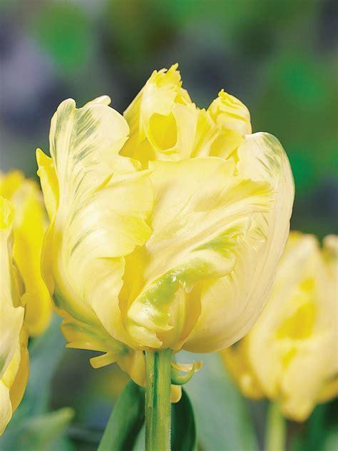 yellow flowers   garden hgtv