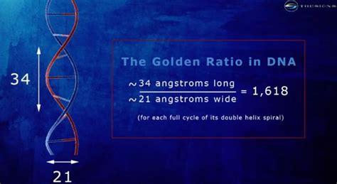 golden ratio dna spiral golden ratio in dna fibonacci fractals mandalas