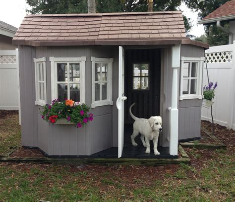 golden retriever dog house cool dog house sson s white golden retriever just