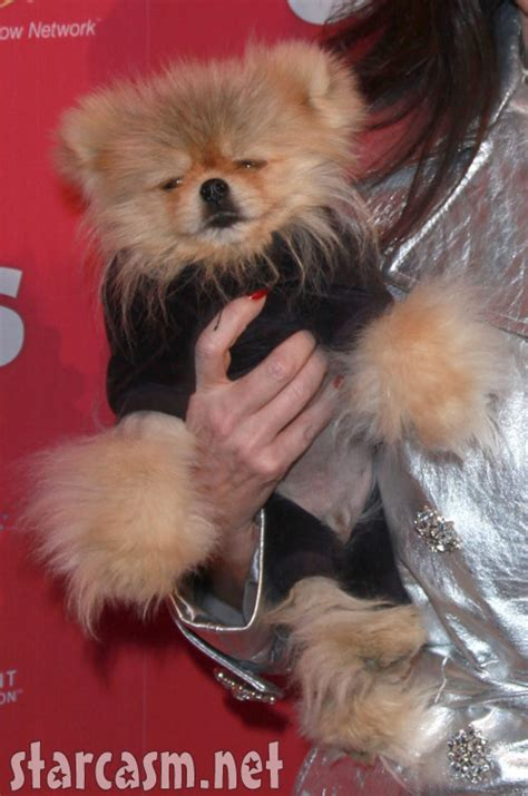 jiggy pomeranian photo vanderpump and giggy on the carpet at the us weekly who care